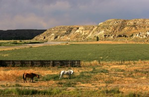 Horses by the Powder River Valley.
