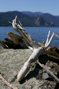 Driftwood along the Columbia River.