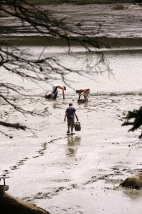 kids clam digging, Deer Isle.